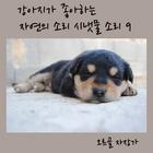 [강아지가 좋아하는 자연의소리 시냇물소리 9 (클래식, 안정, 편안)]
