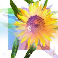 'Re : Flower' PROJECT #5