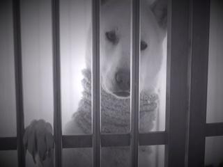 강아지 (Teaser)