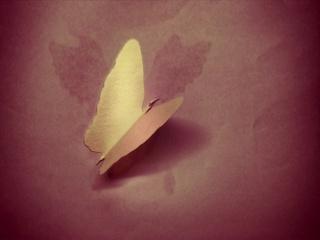 나비 (Butterfly)