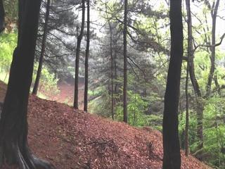 숲 (Feat. 양은선)