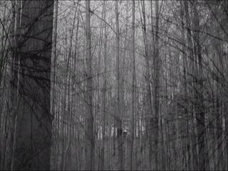 비밀의 숲 (Secret Forest) (Teaser)