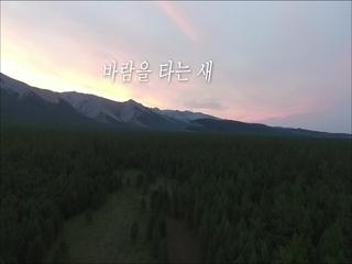바람을 타는 새 (Feat. 안정아)