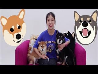 시바의 하루 (유튜브 채널 '시바견곰이탱이' 삽입곡)
