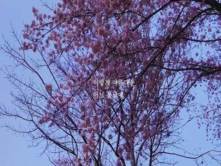 어느 봄날에 (Vocal by 박연 of 담소네공방)