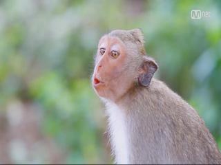 유세윤 목소리 내는 원숭이 발견?!