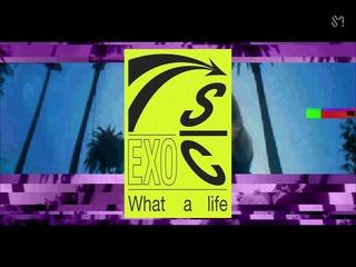 'What a life' Triple Title (MV Trailer)