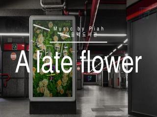 늦게 피는 꽃 (A Late Flower)