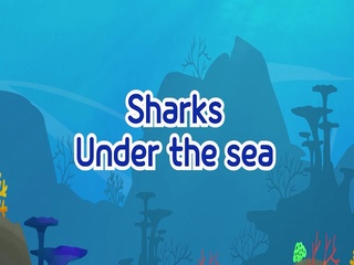 Sharks Under the Sea