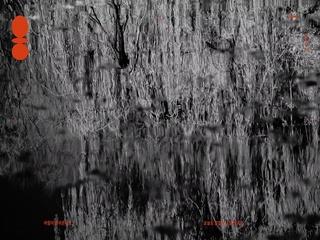 버드나무 (Visualizer)
