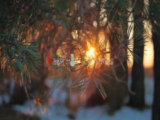 바흐와 크리스마스