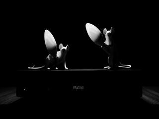STUDIO SHYNESS (Teaser)