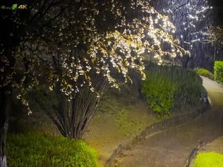 Scent In The Rain