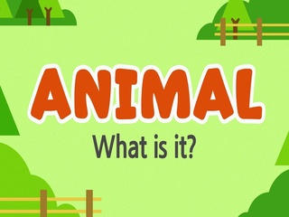 Animal_What is it?