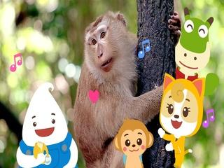 팡팡 원숭이