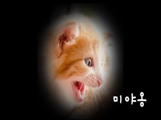 아기 고양이 (고양이 가족) (Lyrics Video)