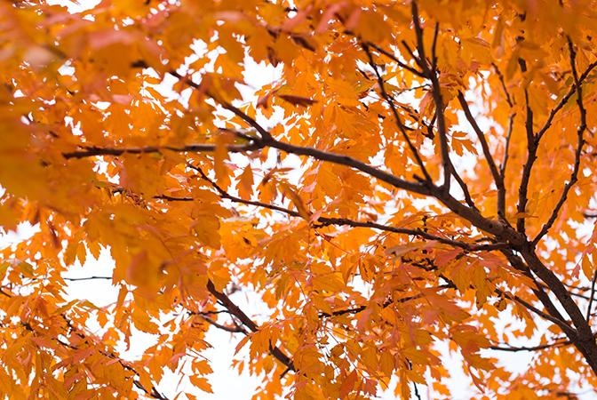 포근하고도 쓸쓸한 계절, 가을에 듣기 좋은 클래식